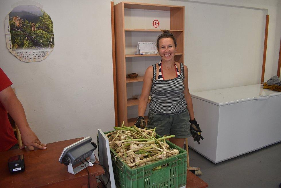 Samosběr česneku nabízející možnost odvézt vlastnoručně vytahaný česnek se zárukou původu, přilákala na rodinou farmu Lexmanových u Červeného Kostelce desítky zájemců. Někteří si odnášeli i kolem 20 kilogramů česneku.