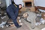 Z výcviku policejních psů. Zásahy městských policistů z Lázní Bohdaneč byly jak vystřižené z akčních filmů.