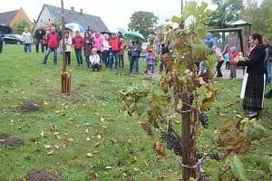 Jednou u největších událostí vinařova roku je tradiční zarážení hory, které se první říjnovou sobotu odehrálo i v Litoboři.