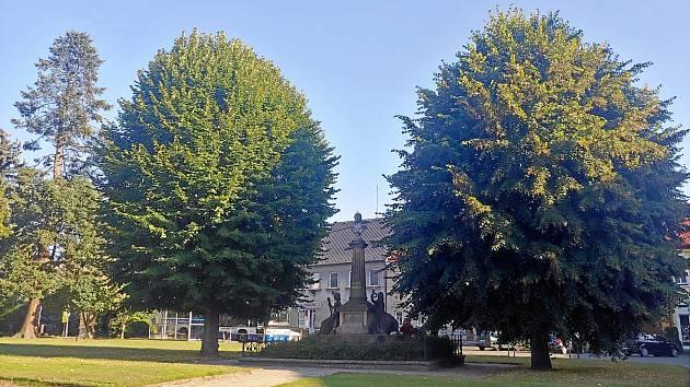 Při revitalizaci Husova náměstí v České Skalici se mají kácet letité stromy. U obyvatel to vzbudilo odpor.
