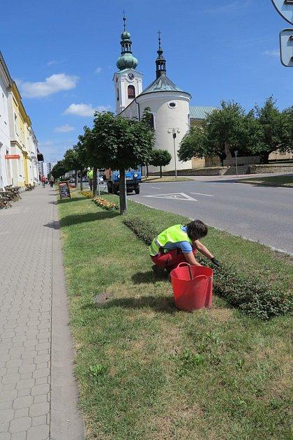 Okvětinovou výzdobu vNovém Městě nad Metují se starají zahradníci městských technických služeb. Jejich práci nyní ničí vandal.