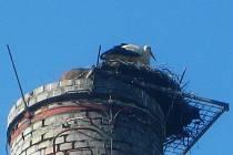Od komínu chytlo čapí hnízdo a tři mláďata uhořela.