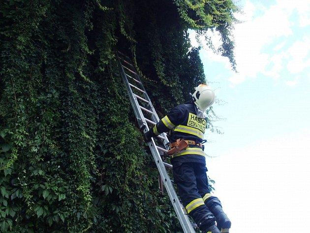 Hasiči zachraňovali kočičku, která po břečťanu vylezla až pod střechu hospody a bála se slézt dolů.
