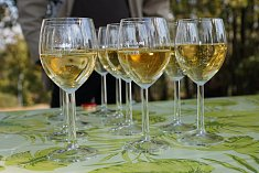 V hostinci Jiřího Pelikána v jediné vinařské obci na Náchodsku se opět sešli milovníci vína. Leto