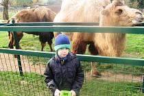 Farmu Wenet v Broumově obývají už i oblíbení lemuři.
