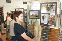 """Na desítkách fotografií si mohou návštěvníci výstavy """"Pavouci, brouci, trampové a jiná havěť"""" prohlédnout svět očima fotografa Jana Moravce."""