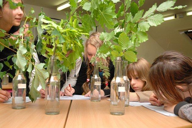 Úkolem bylo rozpoznat a pojmenovat co nejvíce vystavených rostlin.
