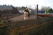 A areálu broumovské ČOV je psí útulek, který zde nadále  funguje i přes právě probíhající intenzifikaci.