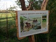 Nové dřevěné cedule na dvou místech stezky zobrazují údolí Metuje a jeho zvířecí obyvatele v období před 8000 lety.