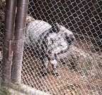 Z jaroměřské záchranné stanice pro živočichy.