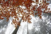 Ponurost i barevnost podzimního lesa zachytil svým fotoaparátem Zdeněk Dočkal.