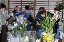 Orchideje vzbudily velkou pozornost.
