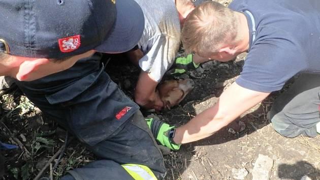 Pes se vydal na průzkum, zachránit jej museli až hasiči