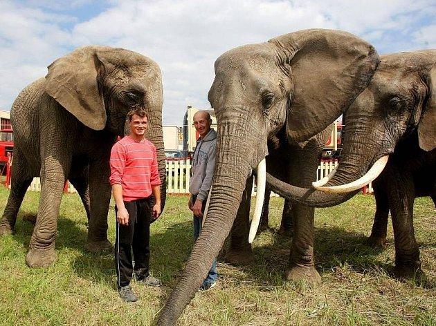Cirkus Humberto se může pochlubit drezúrou třech afrických slonic.
