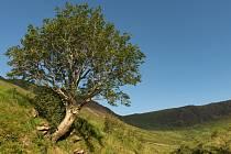 Jeřáb ptačí, Moffat, Skotsko, Velká Británie