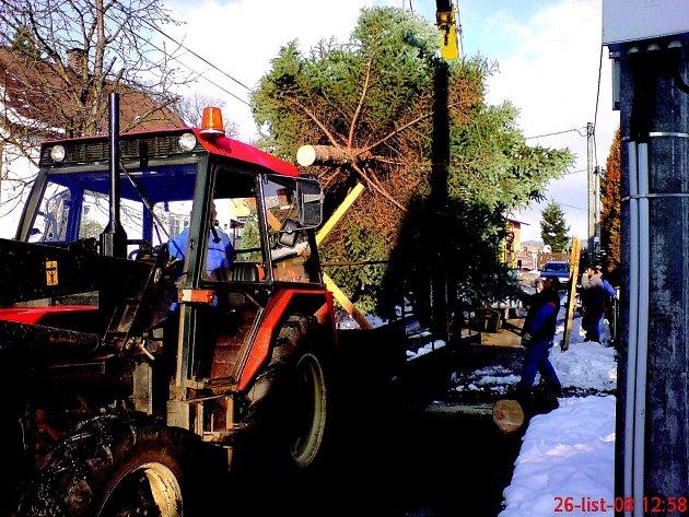 STŘÍBRNÝ SMRK, který včera před třináctou hodinou byl uříznut v Olivětíně, dopravili pracovníci Technickcýh služeb na broumovské náměstí, kde ho budou dnes zdobit.