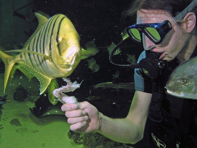 Potápění v akváriu pražských Holešovic.