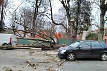 V Hořicích spadl strom na dvě osobní auta.