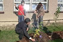 V Machově obnovili žáci jeden z parků a u školy vysadili stromový kalendář.