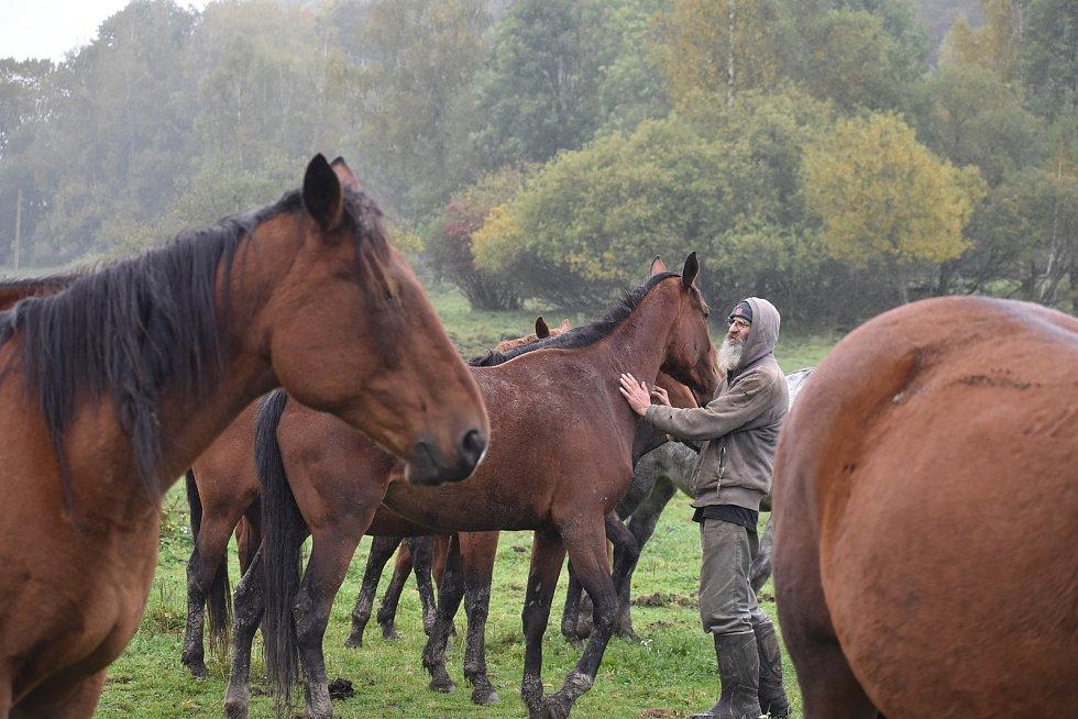 """Cestou na hostinu (nebo z ní) museli vlci proběhnout přes pastviny s koňmi, a koně splašili natolik, že prorazili na několika místech ohradu a několik desítek jich uteklo. """"Muselo to být divoké, protože jsou zlomené i kůly,"""" říká Petr Bartoš, který se oko"""