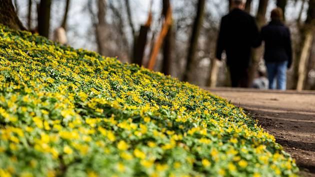 Jaro v zámeckém parku v Kostelci nad Orlicí.