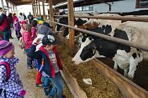 Děti se na dni otevřených dveří setkají s hospodářskými zvířaty tváří v tvář.