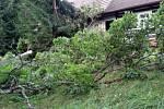 Stromy na Rychnovsku popadaly do elektrického vedení i na chatu.