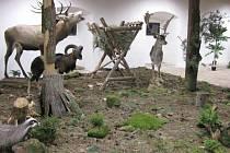 JEDNOU Z EXPOZIC doudlebského přírodovědného muzea je les s krmelcem, kde si příchozí mohou užít tu pravou lesní  atmosféru. Děti tu zase spatřit zvířata, která v lese skutečně žijí.