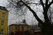 Ořech na dvoře Základní školy Komenského v Rychnově n. K. určený k pokácení,