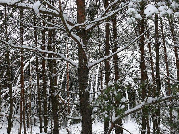 Zima 2010, poslední lednový týden na Rychnovsku