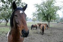 Na statku v Záměli chová Petra Prouzová devět koní různých plemen v rozmezí věku od jednoho roku do sedmnácti let.