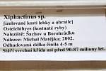 Informace o nalazených pozůstatcích Buldočí ryby.