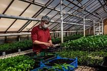 Bio zemědělství Miloše Kurky v Černíkovicích na Rychnovsku.