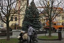 Vánoční strom na náměstí v Dobrušce.