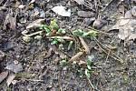 Na bránu zámeckého parku v Kostelci klepalo jaro
