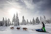 Šediváčkův long - extrémní závod psích spřežení na hřebenech Orlických hor.
