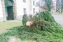 Vánoční strom před zámkem se poroučel k zemi
