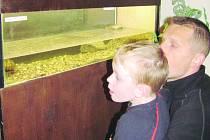 Výstava ryb v Rychnově nad Kněžnou