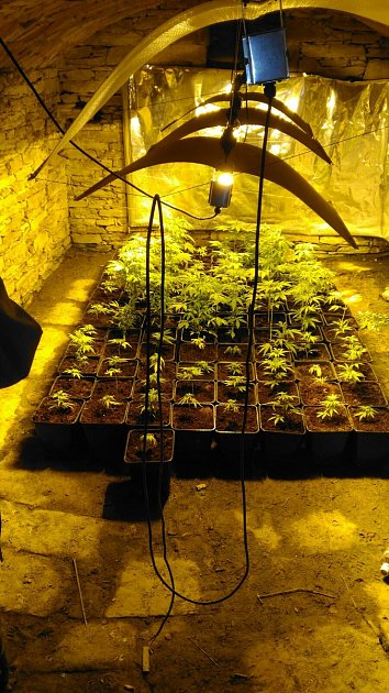 Rychnovští kriminalisté odhalili tři pěstírny konopí.