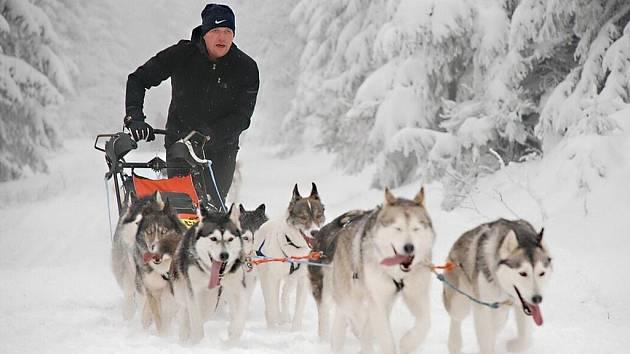 ŠEDIVÁČKŮV LONG patří k nejtěžším závodům v Evropě. Od roku 2002 je jedním ze série čtyř extrémních závodů psích spřežení o titul Iron Sled Dog Man. Ostatní tři závody této prestižní série se konají v alpských zemích