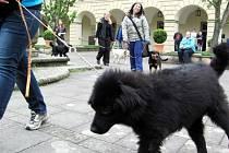 NOVÝ DOMOV hledali na častolovickém zámku psi z lukavického útulku.
