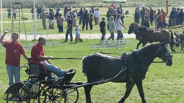 Koně se proháněli po Lipinách
