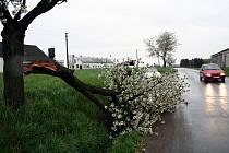 V Pulicích silný vichr v noci zlomil rozkvetlou třešeň u silnice. K omezení provozu však nedošlo, část stromu se zřítila do příkopa a pouze malý zlomek zůstal trčet do cesty.