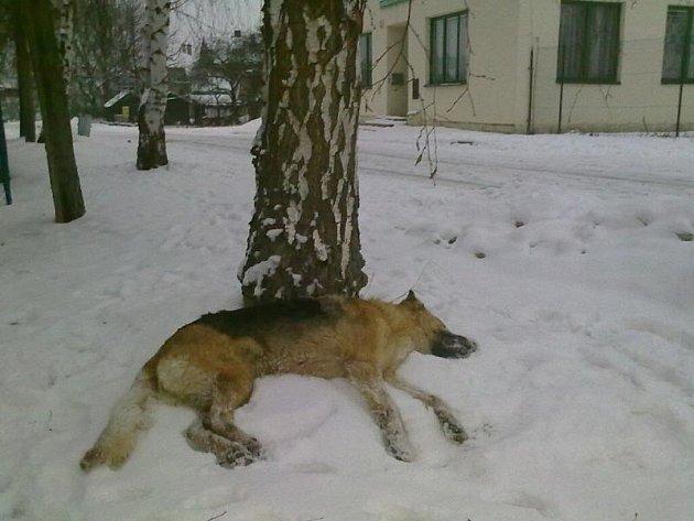 Mrtvou fenu kdosi zanechal na ulici