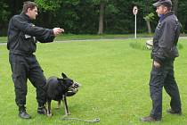 Ve speciálním policejním zařízení se to hemžilo policisty a jejich vycvičenými psy. Nejednalo se však o žádný zásah, ale o krajský přebor psovodů ve služební kynologii