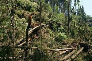 Lesy v Orlických horách po jedné z vichřic.