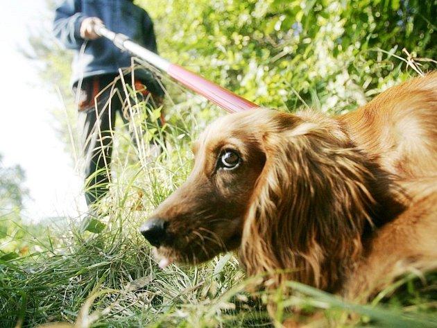 Odchyt psa - ilustrační foto