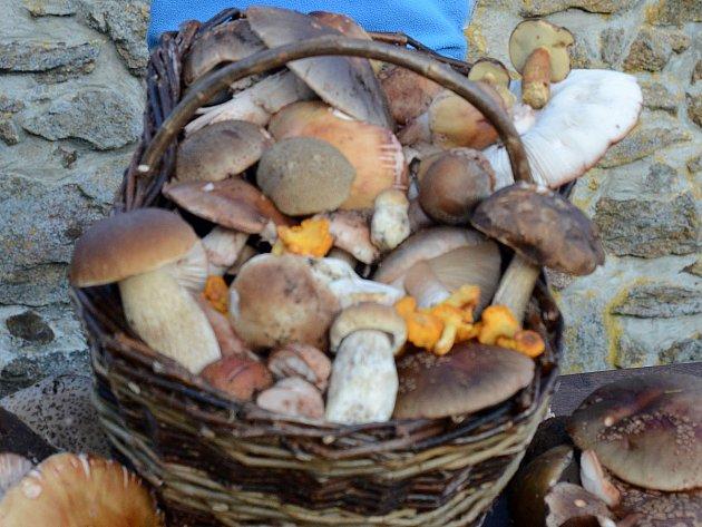 Plný košík hub si bude možné přinést z lesa už za pár dní. Ovšem pokud nenastane nálet houbařů, kteří budou rychlejší než vy.