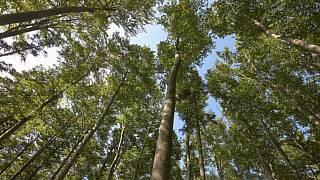 uhlíkové stromy kožené kalhoty datování