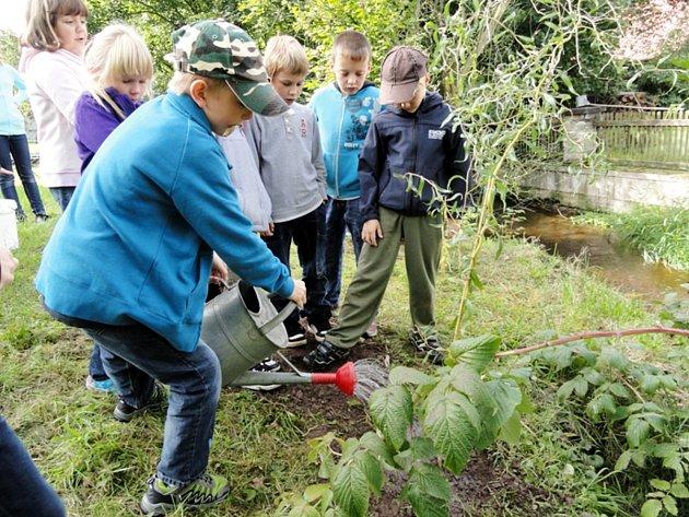 Žáci z Potštejna sázeli nové stromky